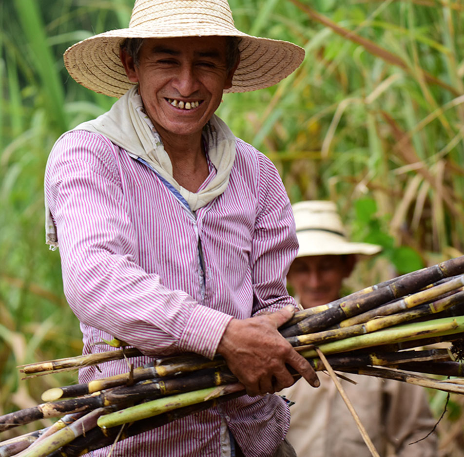 Small, rural panela farms are responsible for the majority of panela production in Colombia